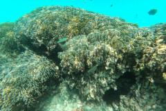 Reef at Uligamu
